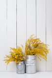 mimosa Стоковое фото RF
