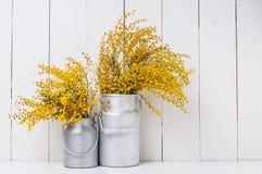 mimosa Стоковое Изображение RF