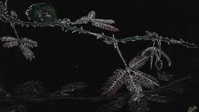mimosa Arkivbilder