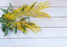 Mimosa amarilla de la flor en la tabla de madera blanca Fotografía de archivo libre de regalías