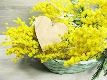 Mimosa arbusto mola amarela fundo cartão floral do 8 de março Imagens de Stock