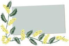 Mimosa border - Greeting card royalty free stock photos