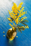 Mimosa Stock Photography