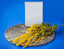Mimosa branch next to a blank page notebook Stock Photography