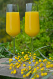 Mimosa cocktail Stock Images
