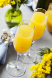 Mimosa cocktail Stock Photography