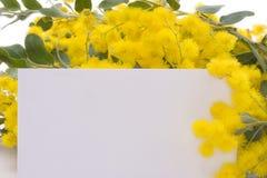 Mimosa con un biglietto dei desideri Fotografia Stock