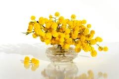 Mimosa dans le vase en verre sur la fin de table  Images libres de droits