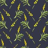 Mimosa del ramoscello, fondo dell'acquerello della primavera Immagine Stock