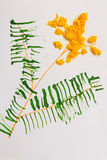 Mimosa di giallo di applique del ` s dei bambini su fondo bianco Immagine Stock Libera da Diritti