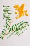 Mimosa do amarelo do applique do ` s das crianças no fundo branco imagem de stock royalty free
