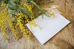 A mimosa e um cartão vazio com um ouro curvam-se Fotografia de Stock Royalty Free