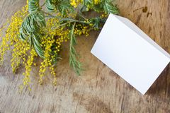 A mimosa e um cartão vazio com um ouro curvam-se Foto de Stock