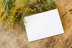 A mimosa e um cartão vazio com um ouro curvam-se Fotos de Stock