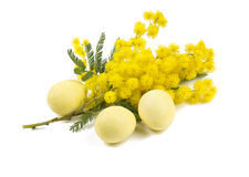 Mimosa and Easter marzipan eggs Royalty Free Stock Photography