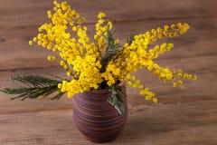 Mimosa in een vaas Stock Foto's