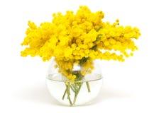 Mimosa en un florero de cristal de cristal Foto de archivo libre de regalías