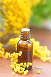Mimosa essential aroma oil. And fresh flowers Royalty Free Stock Images