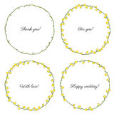 Mimosa flower hand drawn vector illustration isolated on white background, colorful round frame, floral wreath, ink Stock Photos