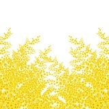 Mimosa flower. On white background royalty free illustration