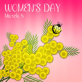 Mimosa flower for Women's Day Royalty Free Stock Photo