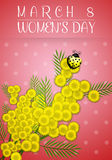 Mimosa flower for Women's Day Stock Images
