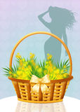 Mimosa flowers. Illustration of mimosa for womens day stock illustration