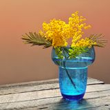 Mimosa flowers in blue glass vase Stock Photo