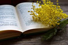 Mimosa flowers on interesting book Royalty Free Stock Photography