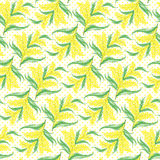 Mimosa flowers seamless pattern Royalty Free Stock Images