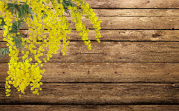 Mimosa flowers on the wood Royalty Free Stock Photography