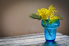 Mimosa flowers on wood background Stock Image