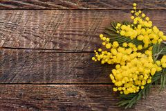 Mimosa flowers on wood background Stock Images