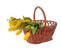 Mimosa, galhos do salgueiro e tulipas em uma cesta Foto de Stock