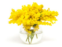 Mimosa in a glass glass vase Royalty Free Stock Photo