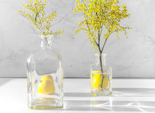 Mimosa in glass vase on table close up Royalty Free Stock Images