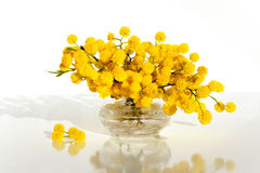 Mimosa in glass vase on table close up.  Royalty Free Stock Images