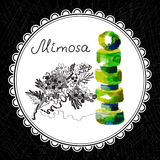 Mimosa. Health and Nature Collection. Aromatic mimosa oil (watercolor and graphic illustration vector illustration