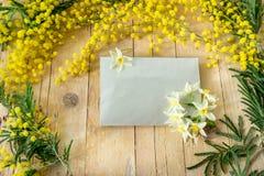 Mimosa i de internationella kvinnornas dag Royaltyfri Foto