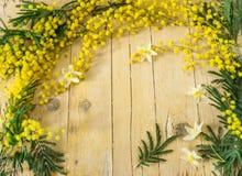 Mimosa i de internationella kvinnornas dag Arkivbilder