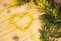 Mimosa i de internationella kvinnornas dag Royaltyfri Fotografi