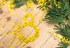 Mimosa i de internationella kvinnornas dag och påsk Arkivfoton