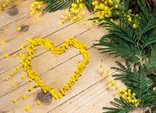 Mimosa i de internationella kvinnornas dag och påsk Royaltyfri Fotografi