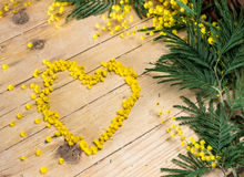 Mimosa in the International Women's Day and easter Royalty Free Stock Photography