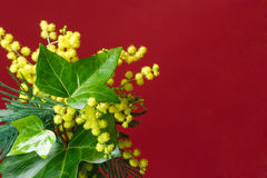 Mimosa and ivy spring border Stock Images