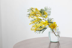 Mimosa in jar. On table stock photography
