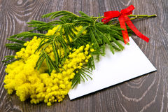 Mimosa kvinnadag Royaltyfria Bilder