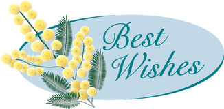 Mimosa with message of good wishes Stock Images