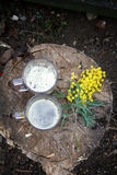 Mimosa and mugs on a tree stump. On March 8 Royalty Free Stock Photo