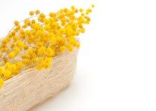 Mimosa na caixa da palha fotos de stock royalty free